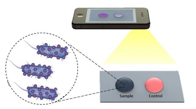 Biosensing Film For Smart Phones to Detect Bacteria and Viruses